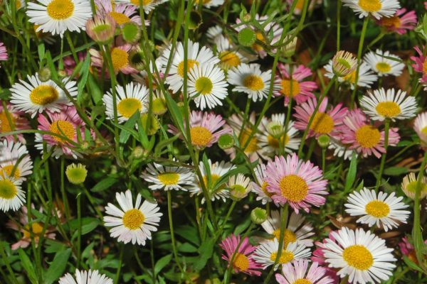 New research into climate change's effect on weeds