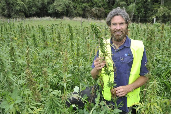 Unitec engineer has weeds, cannabis in her sights