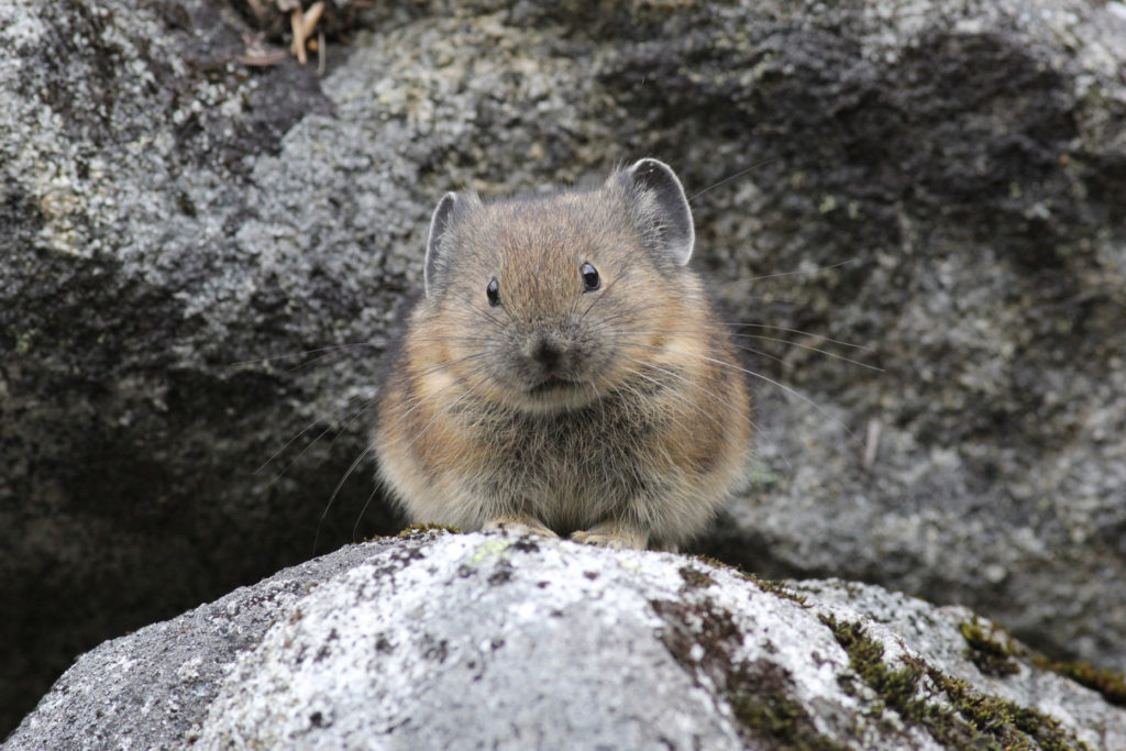 Blog: Climate change, genetics and small fluffy animals - Andrew Veale
