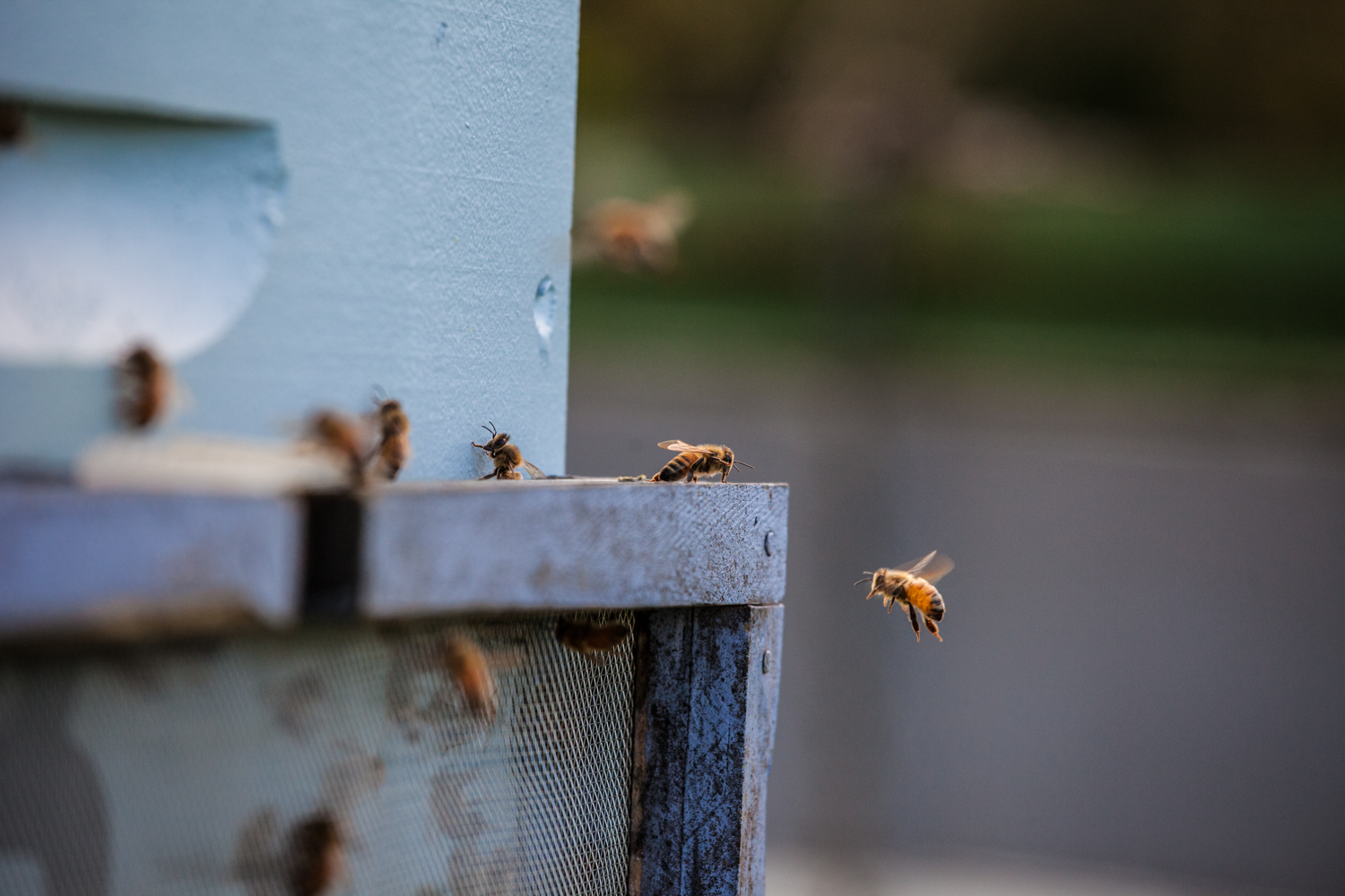 Introducing BuzzTech, the New Zealand company that is helping beekeepers go digital.