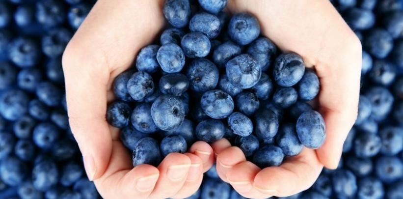 blueberries-boost-your-brainpower