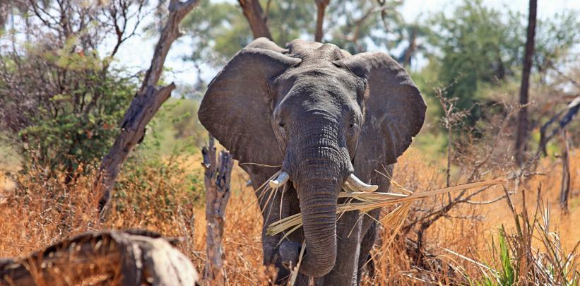 elephant-zoo-inside-story